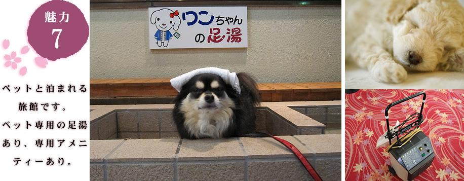 ペットと泊まれる旅館です。ペット専用のアメニティ有り。