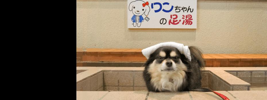 山形県赤湯温泉でペット(小型犬)と泊まれる宿│赤湯温泉丹泉 ...
