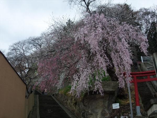 130426_terasaka1